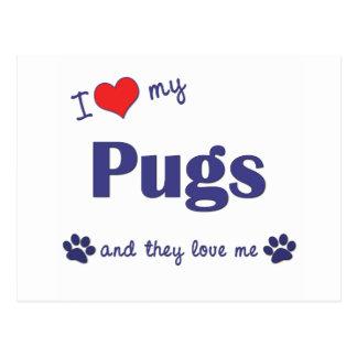 I Love My Pugs (Multiple Dogs) Postcard