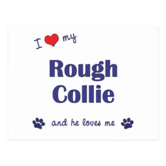 I Love My Rough Collie (Male Dog) Postcard
