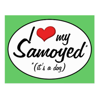 I Love My Samoyed (It's a Dog) Postcard