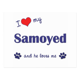 I Love My Samoyed (Male Dog) Postcard