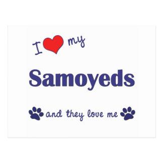 I Love My Samoyeds (Multiple Dogs) Postcard
