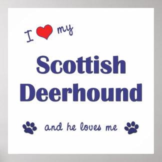 I Love My Scottish Deerhound (Male Dog) Poster