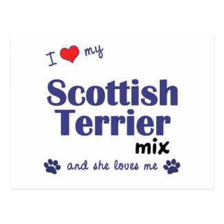 I Love My Scottish Terrier Mix (Female Dog) Postcard