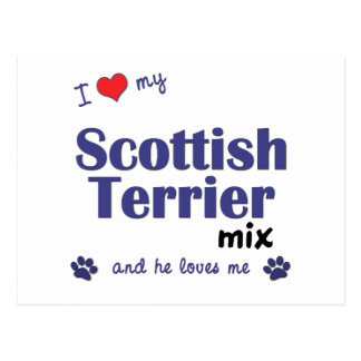 I Love My Scottish Terrier Mix (Male Dog) Postcard