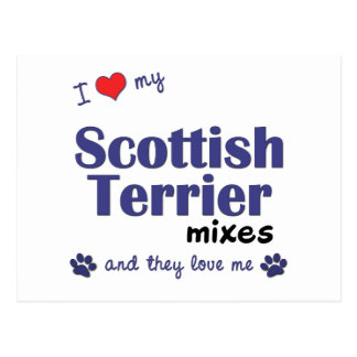 I Love My Scottish Terrier Mixes (Multiple Dogs) Postcard