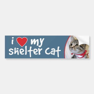 I Love My Shelter Cat Bumper Sticker -Tabby Kitten