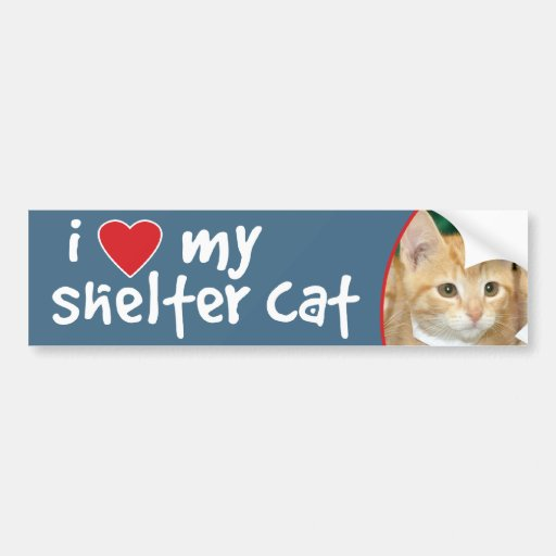 I Love My Shelter Cat Orange Kitten Bumper Sticker