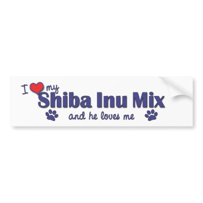 Shiba+inu+mixed