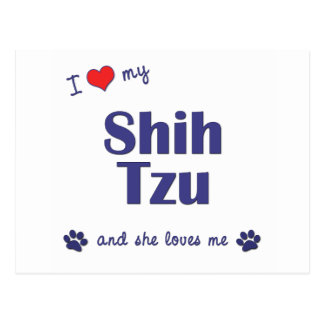 I Love My Shih Tzu (Female Dogs) Postcard
