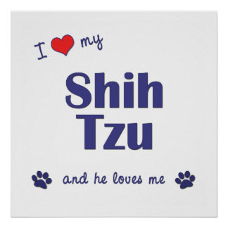 I Love My Shih Tzu (Male Dog) Poster