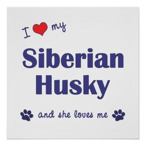 I Love My Siberian Husky (Female Dog) Poster