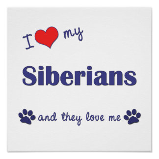 I Love My Siberians (Multiple Cats) Posters