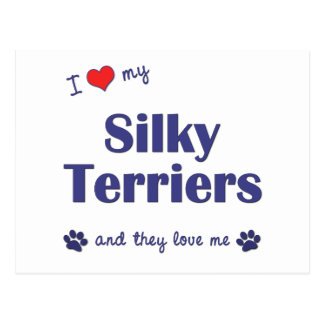 I Love My Silky Terriers (Multiple Dogs) Postcard