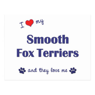 I Love My Smooth Fox Terriers (Multiple Dogs) Postcard