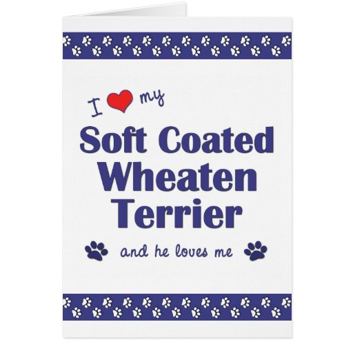 I Love My Soft Coated Wheaten Terrier (Male Dog) Stationery Note Card