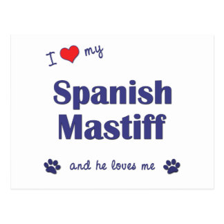 I Love My Spanish Mastiff (Male Dog) Postcard