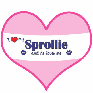 I Love My Sprollie Male Dog Acrylic Cut Out