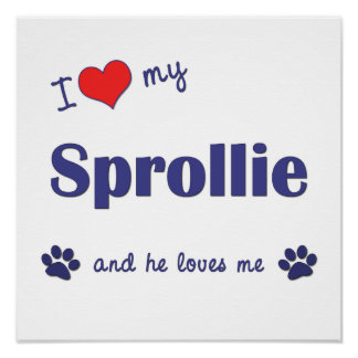 I Love My Sprollie Male Dog Poster