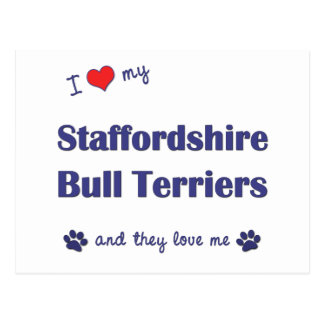 I Love My Staffordshire Bull Terriers (Multi Dogs) Postcard