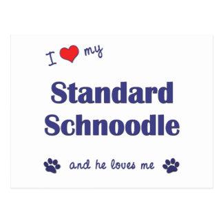 I Love My Standard Schnoodle (Male Dog) Postcard