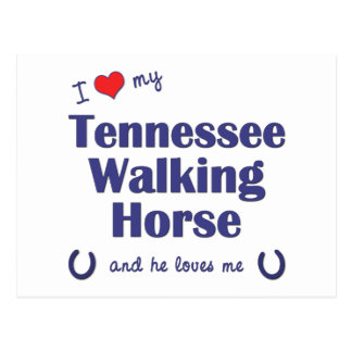I Love My Tennessee Walking Horse (Male Horse) Postcard