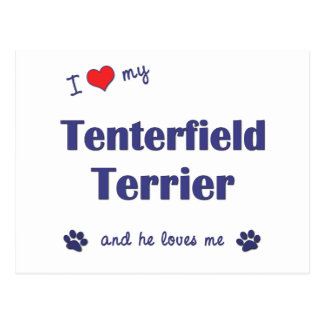 I Love My Tenterfield Terrier (Male Dog) Postcard