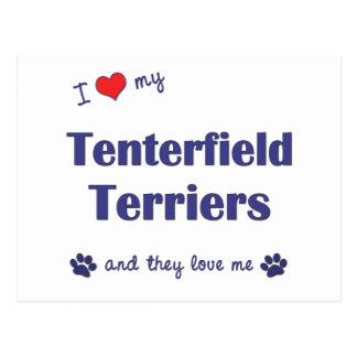 I Love My Tenterfield Terriers (Multiple Dogs) Postcard