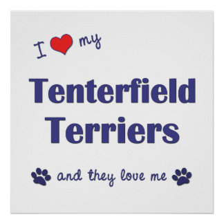 I Love My Tenterfield Terriers (Multiple Dogs) Poster