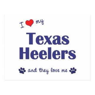 I Love My Texas Heelers (Multiple Dogs) Postcard