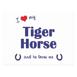 I Love My Tiger Horse (Male Horse) Postcard