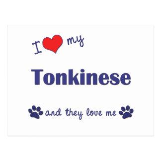 I Love My Tonkinese (Multiple Cats) Postcard