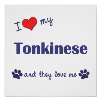 I Love My Tonkinese (Multiple Cats) Poster