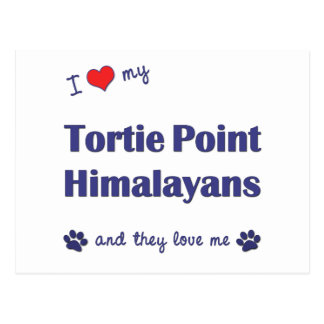 I Love My Tortie Point Himalayans (Multiple Cats) Postcard