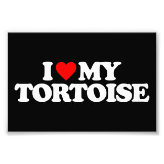 I LOVE MY TORTOISE ART PHOTO