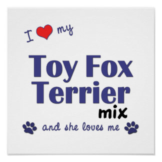 I Love My Toy Fox Terrier Mix (Female Dog) Poster