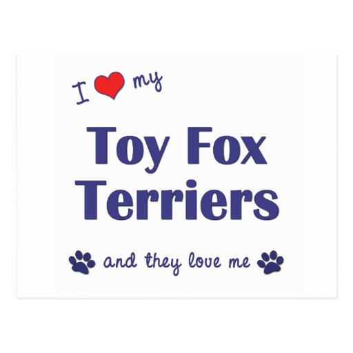 I Love My Toy Fox Terriers (Multiple Dogs) Postcards