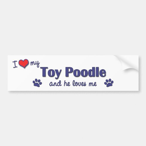 I Love My Toy Poodle (Male Dog) Car Bumper Sticker