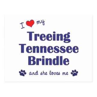 I Love My Treeing Tennessee Brindle (Female Dog) Postcard