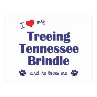 I Love My Treeing Tennessee Brindle (Male Dog) Postcard