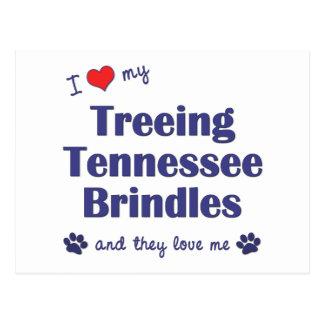 I Love My Treeing Tennessee Brindles (Multi Dogs) Postcard