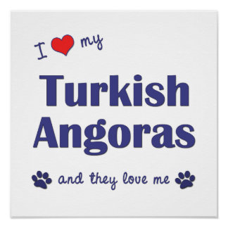 I Love My Turkish Angoras (Multiple Cats) Posters