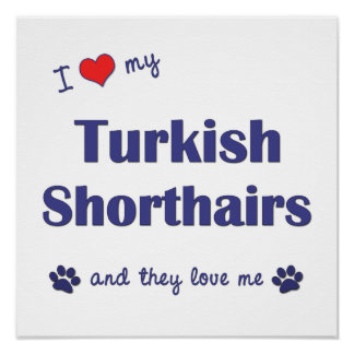 I Love My Turkish Shorthairs (Multiple Cats) Poster