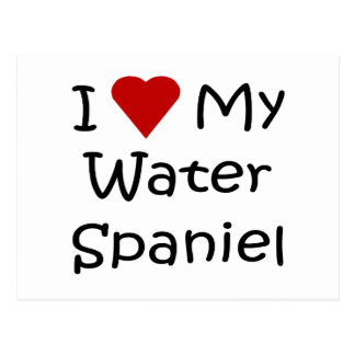 I Love My Water Spaniel Dog Breed Lover Gifts Postcard
