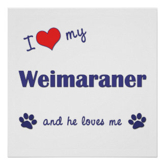 I Love My Weimaraner Male Dog Print