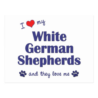 I Love My White German Shepherds (Multiple Dogs) Post Cards