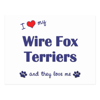 I Love My Wire Fox Terriers (Multiple Dogs) Postcard