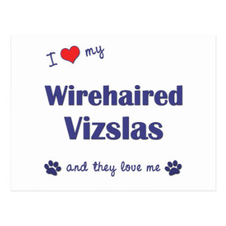I Love My Wirehaired Vizslas (Multiple Dogs) Postcard