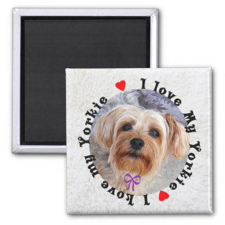 I Love My Yorkie 2 Inch Square Magnet