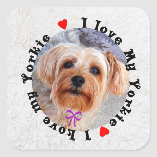 I love my Yorkie Female Yorkshire Terrier Dog Square Sticker