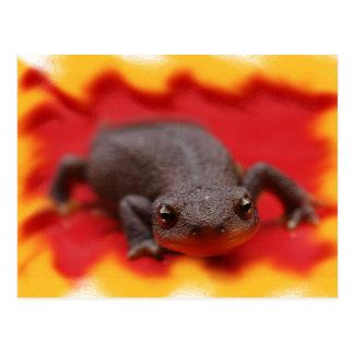 I Love Newts Post Cards